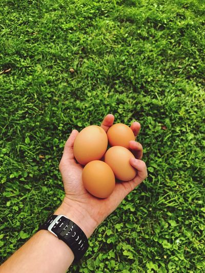 Cropped Hand Holding Eggs
