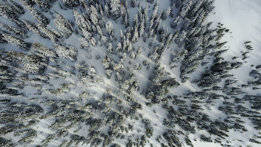 Snow No People Cold Temperature Winter Full Frame Day Plant Tree Outdoors White Color Trees Aerial View Aerial Aerial Shot Snow Covered Snow Covered Trees Light And Shadow Shadows Winter Landscape Frozen Frozen Landscape  Forest Tranquility Nature