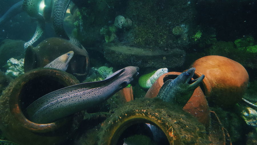 Saltwater Eels Amidst Pottery In Sea