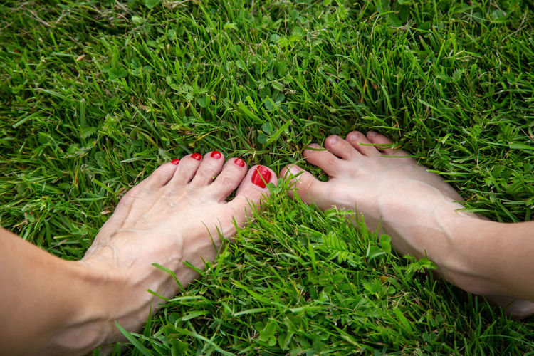 Cropped image of woman hand on grass