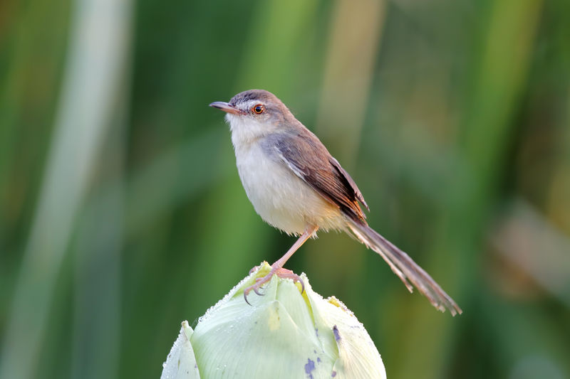 One Animal Animals In The Wild Animal Wildlife Bird Animal Animal Themes Vertebrate Perching Focus On Foreground Close-up No People Day Plant Beauty In Nature Nature Green Color Outdoors Selective Focus Looking Away Full Length Mouth Open