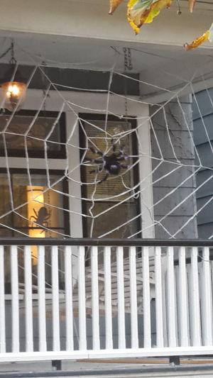 Halloween Bufffalo,NY عيد القديسين الهالوين في حارتنا