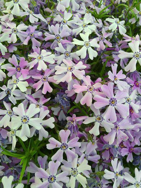 Full Of Flowers Blossom