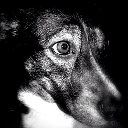 Dog Days EyeEm Bnw Bw_dogs EyeEm Animal Lover