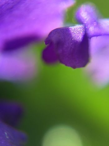 Purple Close-up Flower Nature Beauty In Nature Colors And Textures Of Nature Macro Photography Macro_collection Macro