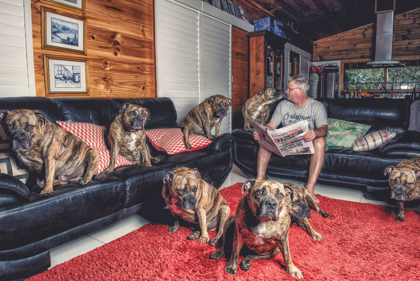Because one dog is not enough! Dog Dogslife Fun Indoors  Lots Man Multiplicity People Photoshop