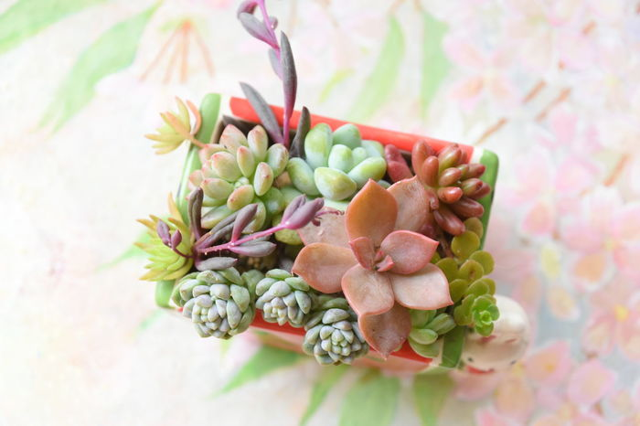 Beauty In Nature Flower Leaf Nature New Life Plant Succulentlove Succulents SucculentsLover