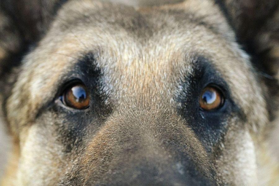 BelgianShepherd Curiosity Dogs Of EyeEm