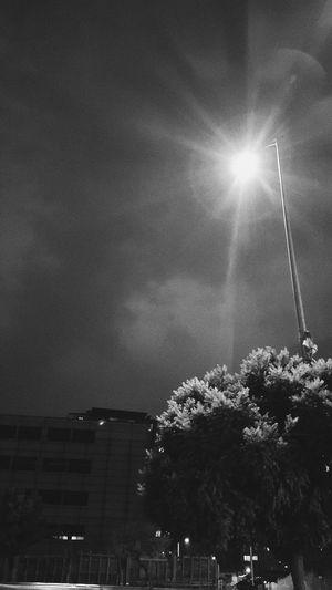 Streetphotography Streetphoto_bw Street Light Bnw Blackandwhite Tree Illuminated Astronomy Sky Palm Tree Lightning