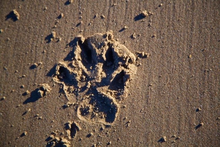 Animal Track Beach Close-up Day Nature No People Outdoors Paw Print Paw Print In Sand Sand