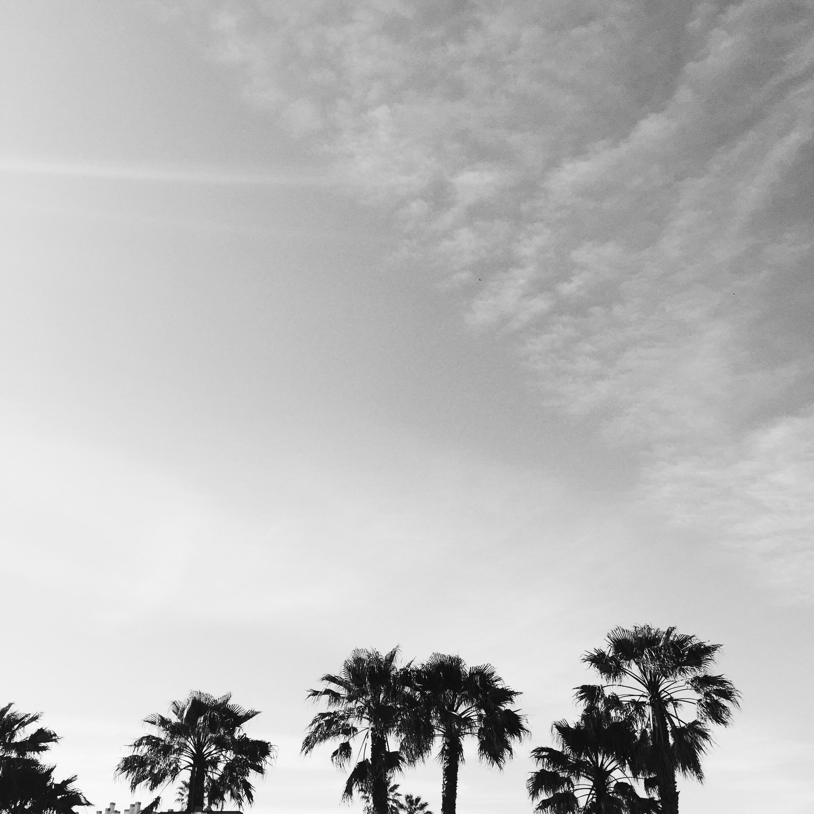 low angle view, tree, palm tree, sky, tranquility, growth, beauty in nature, nature, silhouette, treetop, scenics, high section, tranquil scene, cloud - sky, branch, outdoors, no people, day, cloud, tree trunk