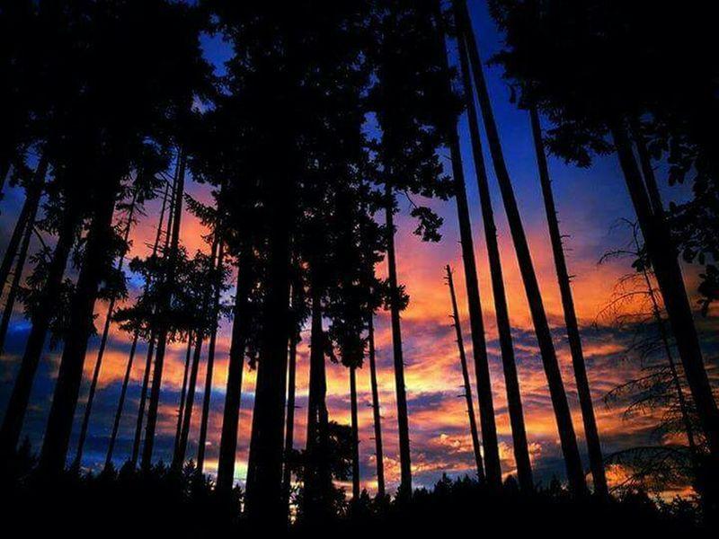 Epic Shot Photography Sunset #sun #clouds #skylovers #sky #nature #beautifulinnature #naturalbeauty #photography #landscape Eyeemsunset Sky And Trees Northwestsunsets Sunset_collection Natgeo