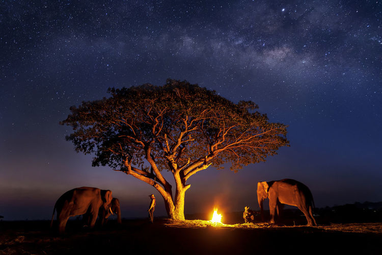 Long exposure Photograph with grain. The mahout is creating a fire with elephant under the tree. The Milky Way in the sky. Galaxy, Star Study and Milky Way Astronomy at Surin, Thailand. Mar 10, 2019 Night Tree Mammal Star - Space Sky Nature Plant Animal Themes Animal Domestic Animals No People Scenics - Nature One Animal Illuminated Space Domestic Land Astronomy Beauty In Nature Field Outdoors Milky Way Bonfire My Best Photo