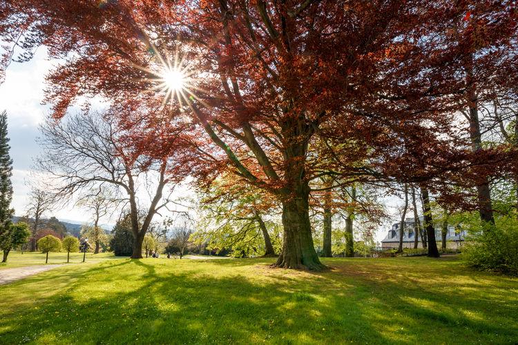 Sun shining through trees in park