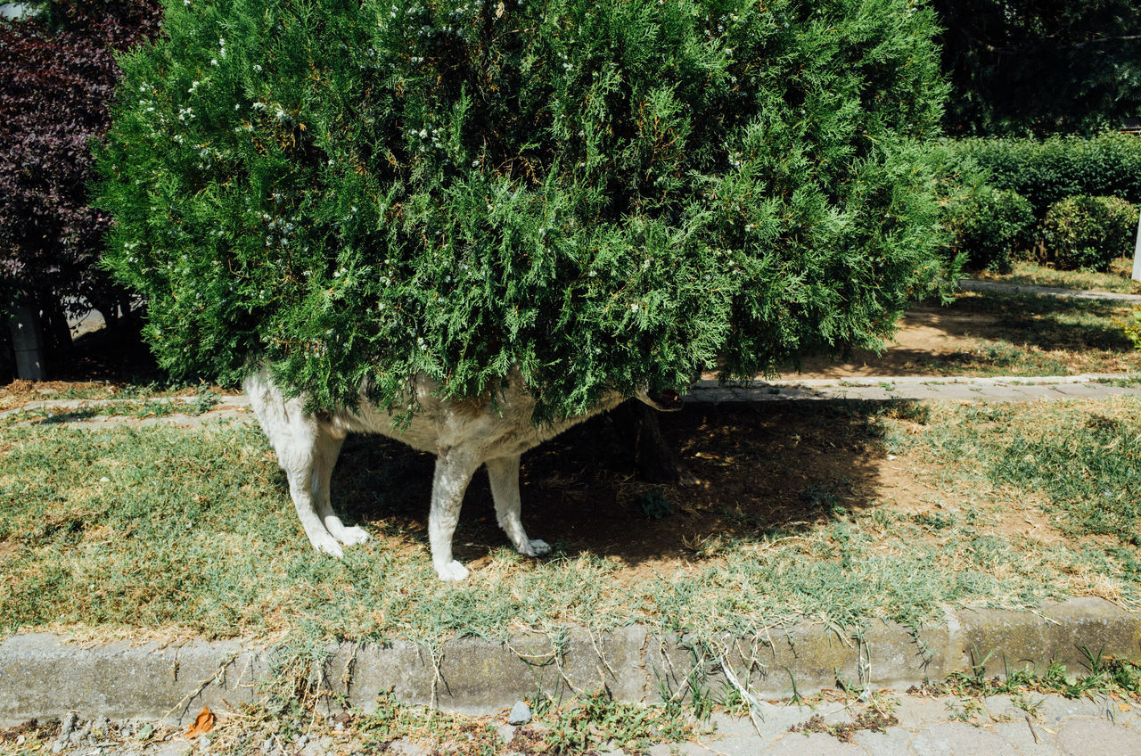 Close-up of dog hiding in plant