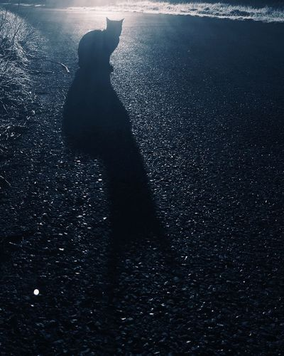 Batcat Real People One Person Shadow Lifestyles Leisure Activity Beach Nature Outdoors Cat Batman EyeEmNewHere Eyeemphotography EyeEmBestPics Best EyeEm Shot Eye4photography  Silhouette Water Standing Day Sunlight Low Section Road Sea Beauty In Nature People