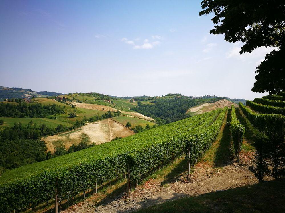 Winecountry Wine Time Landscape_photography Landscape Langhe Piemonteturismo Piemontexperience Piemonte Travel Photography Travel Destinations Travel Italia