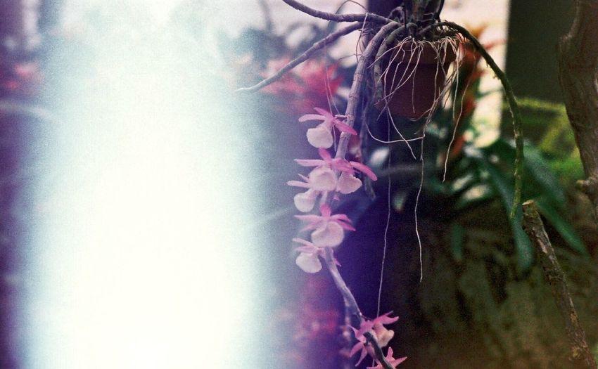 35mm Film Flower Nature Photosensitive Photo 感光写真 ボツ写真 EyeEm