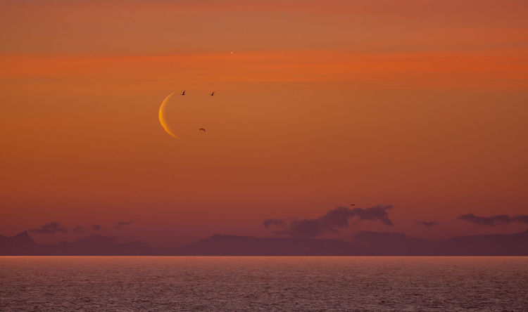 Moonrise of new moon over arctic circle in early morning with birds flying in front of the new moon Crescent Moon Moon Arctic Beauty In Nature Birds Cloud - Sky Crescent Dusk Flying Horizon Horizon Over Water Idyllic Nature No People Orange Color Outdoors Scenics - Nature Sea Silhouette Sky Sunset Tranquil Scene Tranquility Water Waterfront