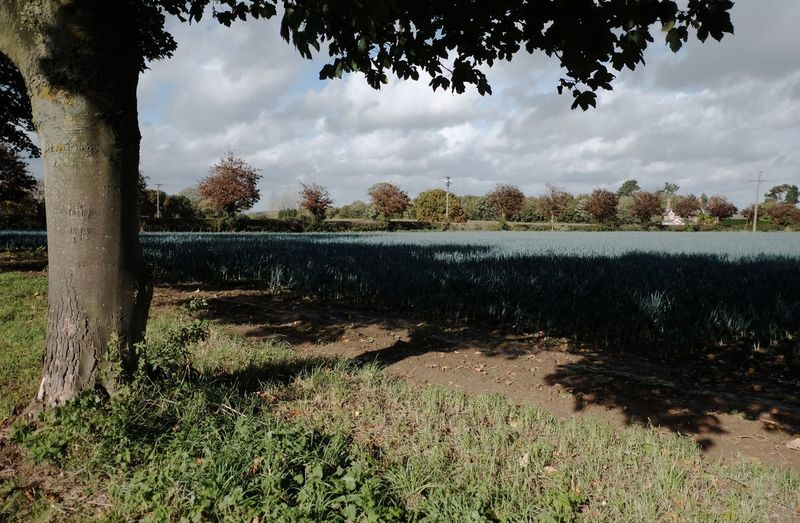 Lincolnshire Raithby Spilsby Leeks Fields Wolds