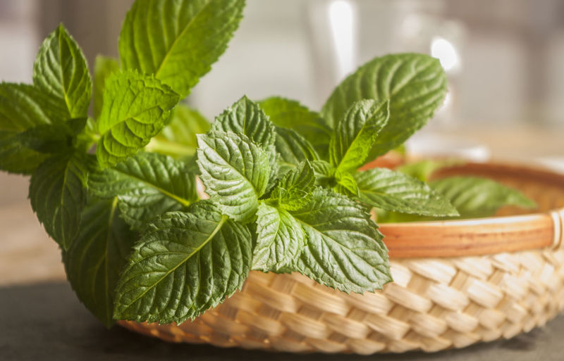 Close-up of mint leaves in basket