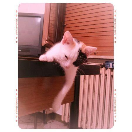"""Momento """"abbiocco"""". 😍 Micina Nanna Catsnap Amore Made with @nocrop_rc Rcnocrop"""