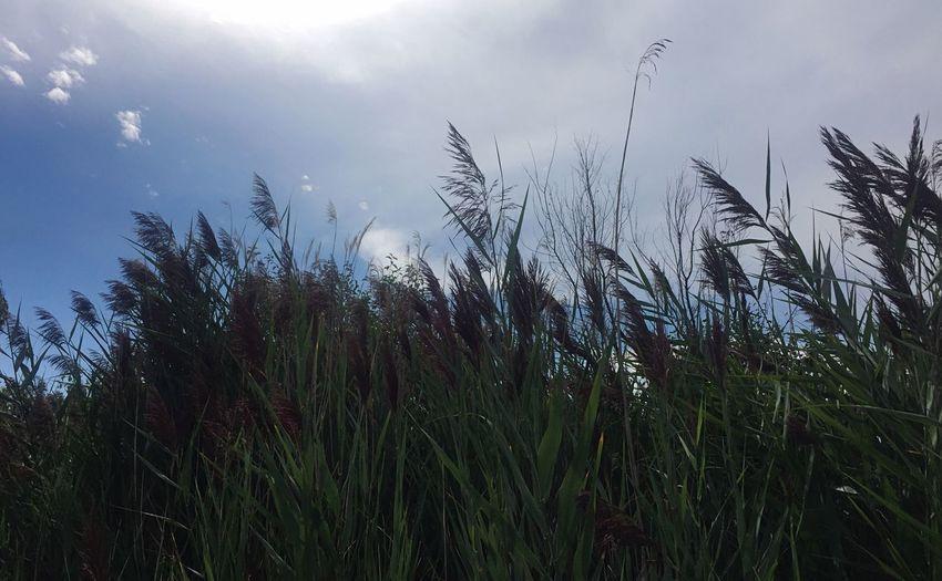 Growth Grass