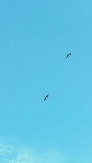 Yanyana olabilirdik. Özlemek bazen kötü hissettiriyor... Ineedamiracleformylostsoul Silhouette Fly Away Leyleğihavadagördüm Birds Gocmenkuslar MotherNaturesGift Eye4photography  Nature_collection Sky_ Collection