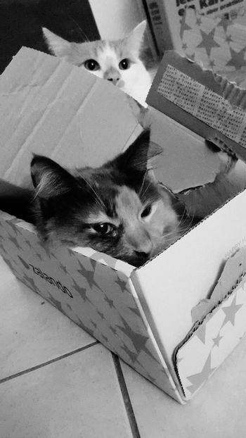 Pets Animal Themes Mammal Domestic Cat Domestic Animals Indoors  No People One Animal Feline Close-up Day Blackandwhite HugoTheTomcat MarieTheCat Neu Wulmstorf At Home Chilling Meow🐱 Conflict Growth