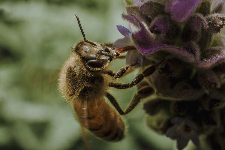Bee Abeja