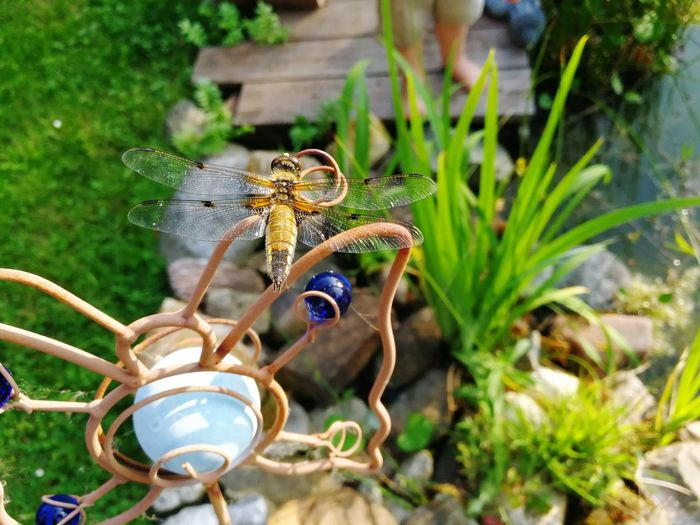 Live For The Story Insect Animal Wildlife One Animal No People Close-up Outdoors Nature Dragonfly Dragonfly_of_the_day Day Animals In The Wild Smartphone Photography
