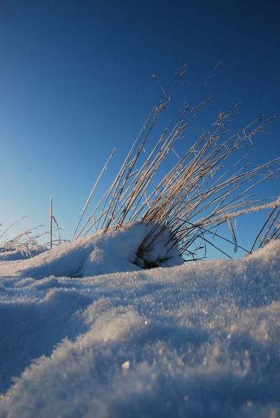 Beauty In Nature Blue Bluesky Clear Sky Close Up Nature Close Up Shot Cold Temperature Day Field Freezing Weather Frozen Grass Frozen Landscape Nature No People Outdoors Scenics Sky Snow Tranquil Scene Tranquility Weather White Color Winter