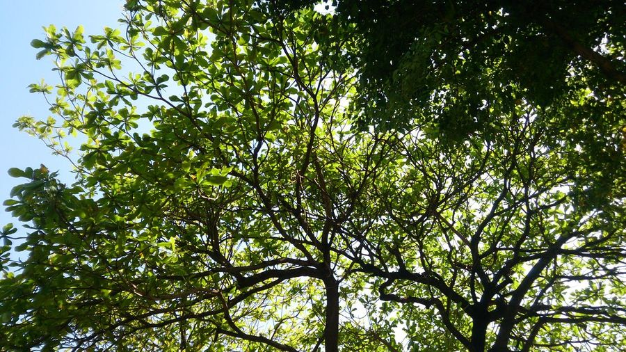 Plant Nature Tree Branch Backgrounds Clear Sky Full Frame Leaf Forest Sky Green Color Plant Life Growing Petal