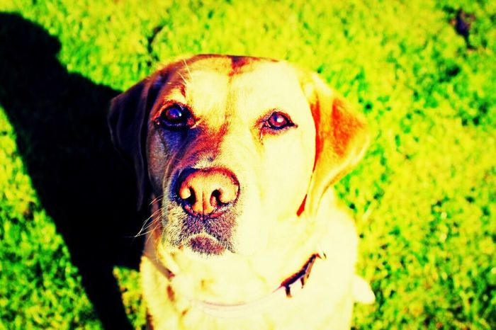 Golden pooch Animals Dog Portrait Crossprocess