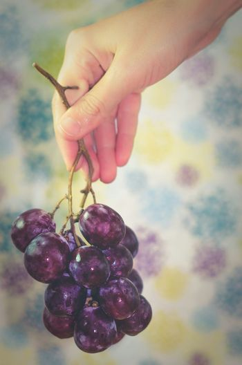Holding grapes Grapes Hand Holding Bunch Fruit Colorful Cluster