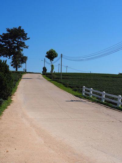 Road tea's farm