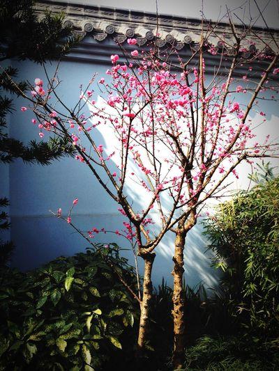 Nature Tree Chengdu Sunshine