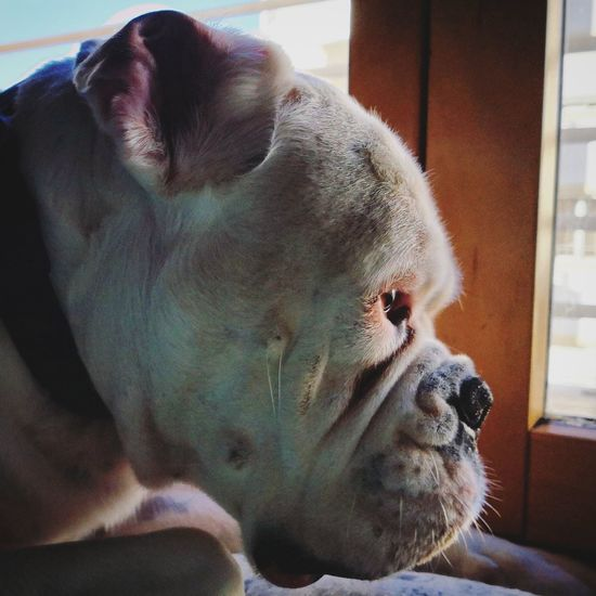 Huawei mate 10 pro Dog Animals