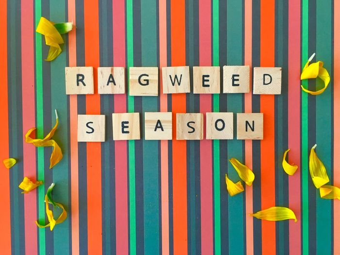 RAGWEED SEASON