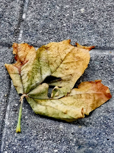High angle view of dry leaf on street