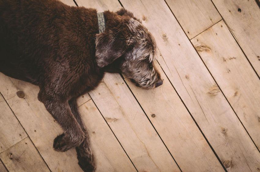 Animal Themes Day Dock Dog Domestic Animals High Angle View Mammal No People One Animal Pets Sleeping Wood - Material
