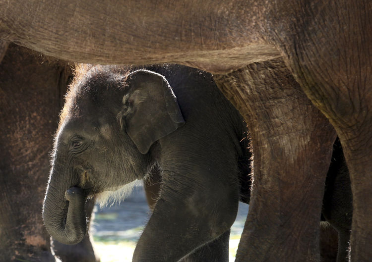 Close-up of young elephant walking on field