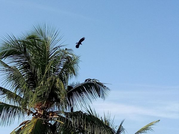Nature Bird Taking Photos Alandur Chennai