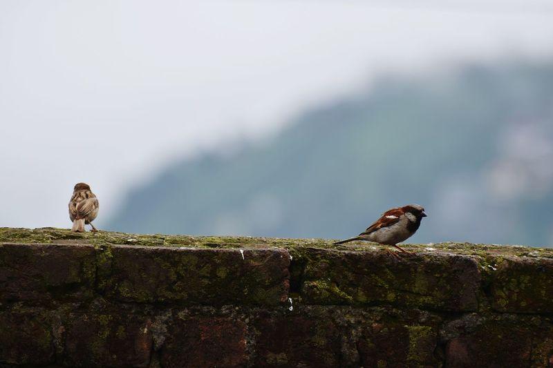 Birds Bird Photography Bird Watching Birdporn Birdlife Bird Lover Nature Little Bird Beautiful Birds Couple