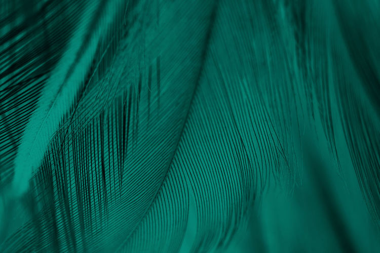 Backgrounds Full Frame Green Color Pattern Close-up Feather  No People Textured  Blue Selective Focus Vulnerability  Abstract Softness Bird Fragility Simplicity Natural Pattern Textile Peacock Feather Studio Shot Lightweight Turquoise Colored Textured Effect