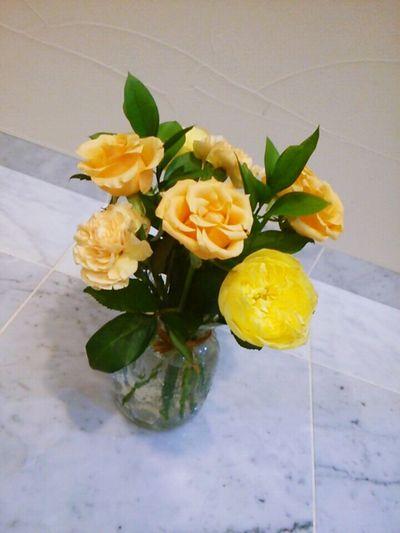 Flowers Beautiful Carnation Orangecarnation Orange Flower Rose🌹 Yellowrose Yellow Flower