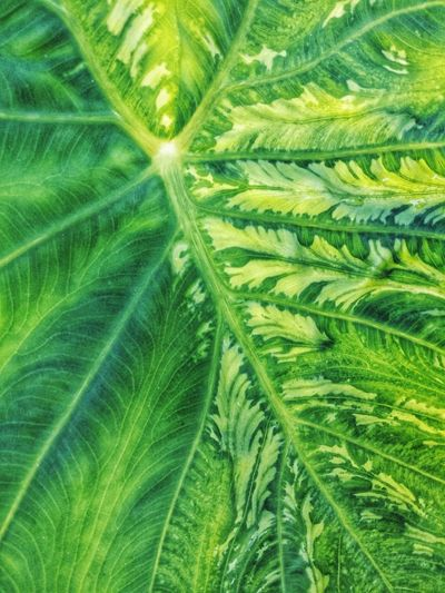 Texture Pattern, Texture, Shape And Form Mixed Swirl Illuminated Green Color Backgrounds Bright Nature Backgrounds Leaf Full Frame Fanned Out Botany Close-up Plant Leaf Vein Green Leaves Natural Pattern Greenery