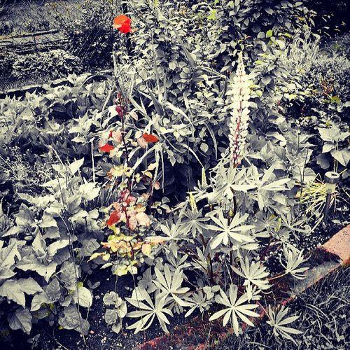 Garten Blume Rasen Instagram instagramfilter