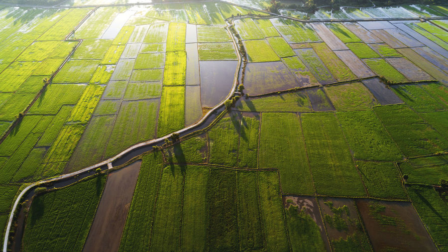 A small gravel road built across a vast farmland area. Aerial View Agriculture Beauty In Nature Cultivated Land Day Farm Field Green Color Growth Landscape Nature Nature, Landscape, Green, View, Rural, Farm, Agriculture, Field, High, Grass, Environment, Summer, Land, Aerial, Air, Beautiful, Sky, Food, Grow, Top, Plant, Harvest, Pattern, Earth, Ground, Natural, Survey, Angle, Flying, Above, Background, Country, Terr No People Outdoors Patchwork Landscape Rice Paddy Rural Scene Scenics Tranquil Scene Tranquility