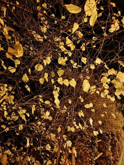 Autumn at Night EyeEmNewHere EyeEm Nature Lover Autumn colors Autumn Night Exposure Enjoying Life Tree Backgrounds Full Frame Pattern Yellow Abstract Textile Close-up Dried Leaves Leaf Vein Textured  Rough
